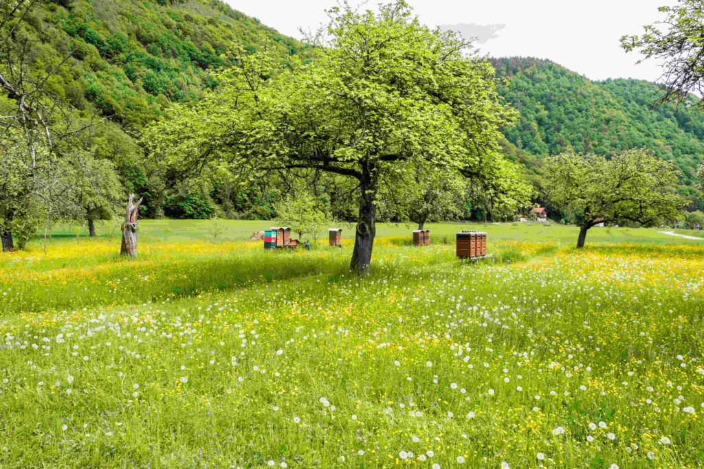 Apfeltag auf Hof Ramsbrock