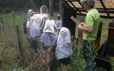 Honigernte mit den Kindern der Naturschule Gütersloh