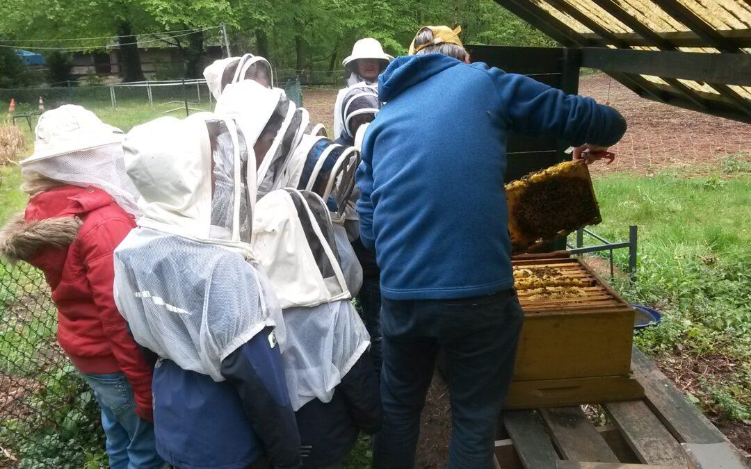 Naturschule bei Veit Dreessen und seinen Bienen…